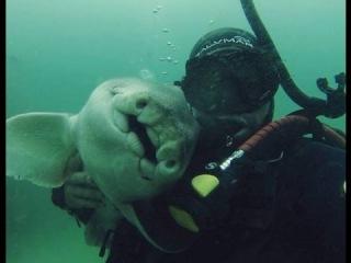 Любительница объятий или как акула уже 7 лет дружит с австралийским дайвером