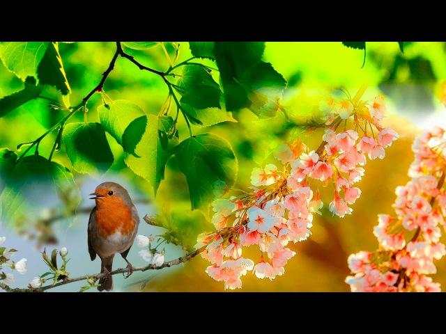 Звуки леса, Соловей, речка, первые цветы, Весенний лес 2017