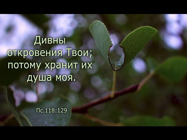 О прощении самих себя и о проклятиях