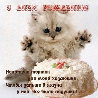 Открытки с котиками с днем рождения юля