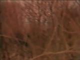 Аквариум -Танцы На Грани Весны