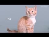 100 лет красоты котенка за одну минуту