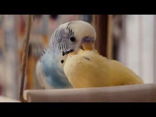 LOVE STORY - Кеша и Нюша. Первый день знакомства
