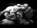 история о кошке и ее человеке