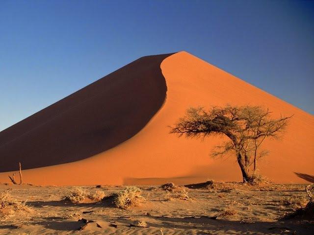 Скорость жизни Пустыня вечная борьба между хищником и добычей Дикая природа Discovery 29 12 2016