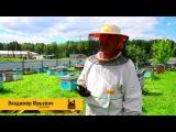 Мёд Сибирский, разнотравье.