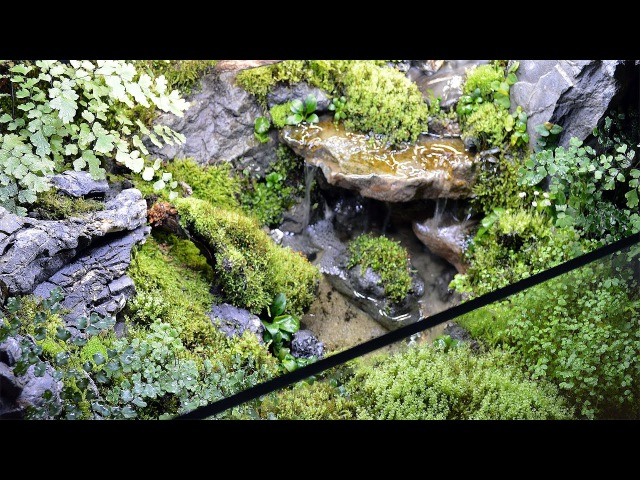 Waterfall In Paludarium