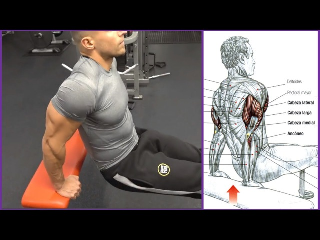 4 Ejercicios para el Triceps (Workout) | Fitness Body