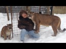 Mauled by Cougar Max and Genevieve in Michigan's Upper Peninsula
