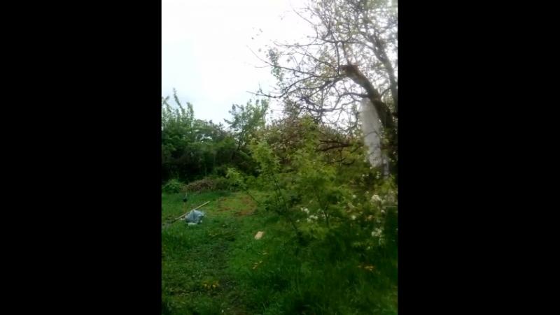 Пение птиц в саду