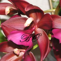 beautiful_orchids
