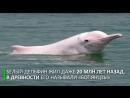 Неуловимый белый дельфин попал на камеру в Китае