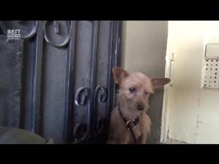 Спасение ужасно испуганной собаки