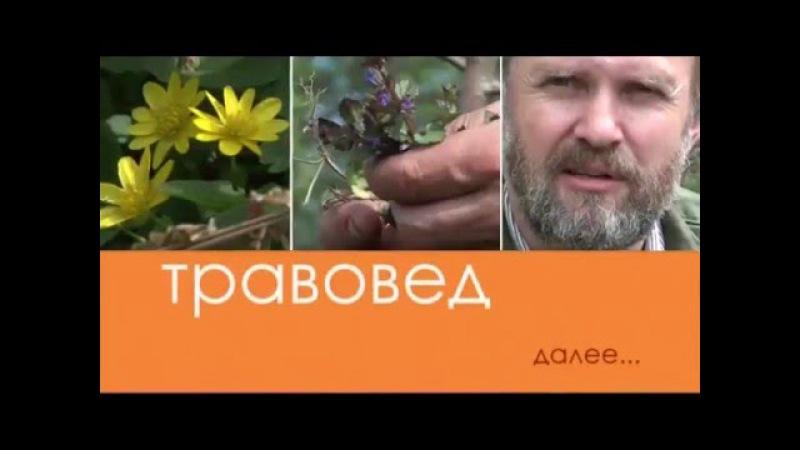 Травовед. Физалис. Рассказывает Моряков Сергей Викторович