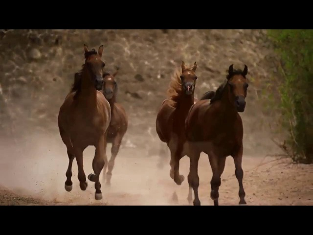 Horses in Dream 1080p HD