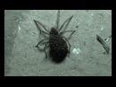 УЖАС Огромный ядовитый крымский паук у меня во дворе