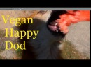 ВЕСЕЛЫЙ ПЕС ВЕГАН HAPPY DOG VEGAN