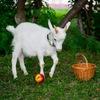 Фотосессии с милейшими животными))