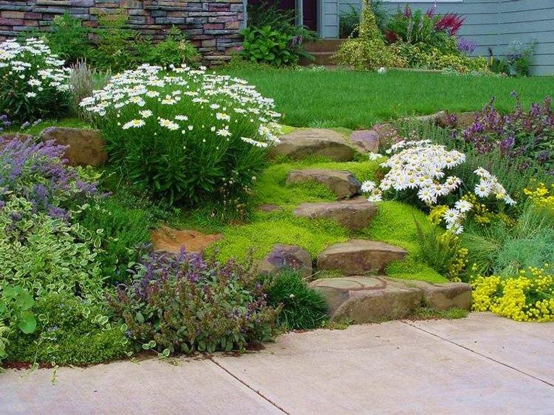 Растения для альпийской горки-ромашки,гиацинты,почвопокровные