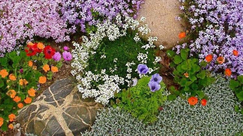 Растения для альпийской горки-яркие цветы для настроения