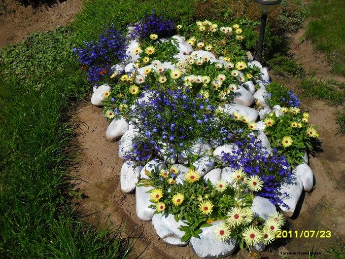 Растения для альпийской горки-мезембриантемум и лобелия