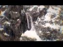 Latok III, 2011 Русский путь - стены мира, команда Александра Одинцова