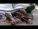 В брюхе акулы нашли человекоподобное существо! Ужасная история! Подводная цивил...