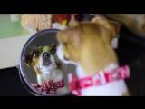 Песня из мультфильма Тайная жизнь домашних животных - СОБАКА ДЖИНА ПОЁТ - Elli Di