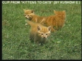 Arabesque - Stupid boys (Clip from Kittens to cats by Kuskow E.)