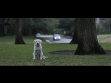 IF I COULD TALK _ BEST DOG FILM SHORT Director @ShawnWellingAXI