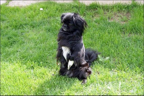 #подписчики Ребята пожалуйста помогите найти собачку в районе Маклино.
