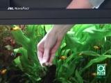 Кормление рыб таблетированным кормом JBL NovoTab, NovoFect, NovoPleco