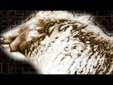 Art Of Trance - Praxia Original Mix Platipus Official Video