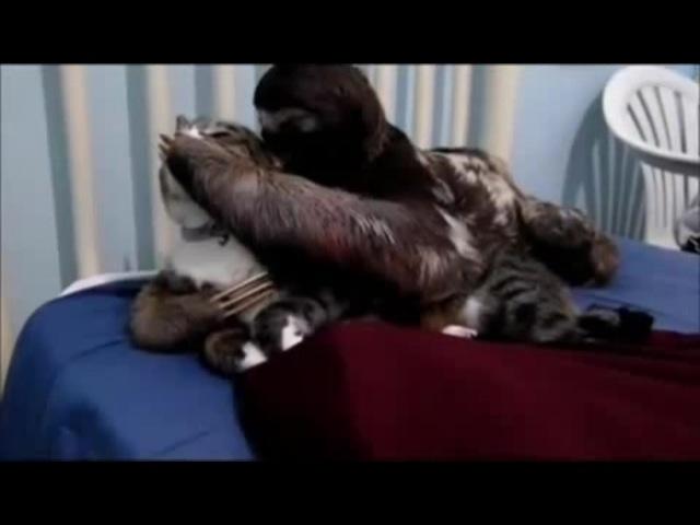 Ленивец-Джокер · coub, коуб