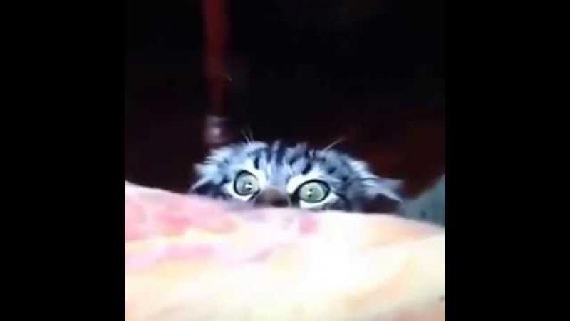 Pisica spion Hahahaha :) :) :) :) :) :) :) :) :)