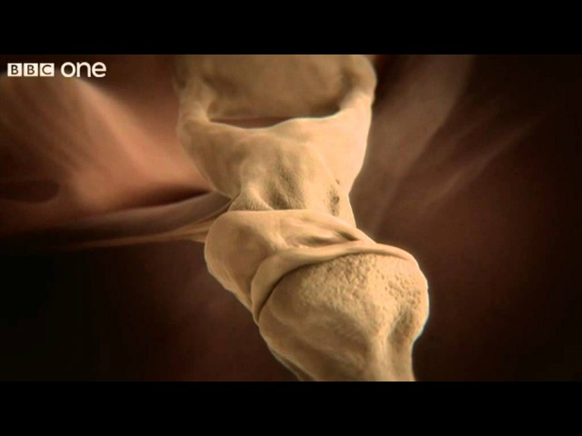 How your ear works - Inside the Human Body: Building Your Brain - BBC One
