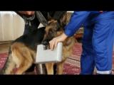 Т/С Лорд Пёс - полицейский 9 серия 2013г