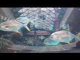 Киевский аквариум, морские рыбки