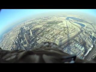 Орел в Дубае
