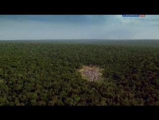 BBC Африка / Africa 03. Джунгли Конго (2013 / 6 серий из 6)