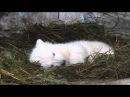 Новосибирский зоопарк Медвежонок без мамы валяет дурака