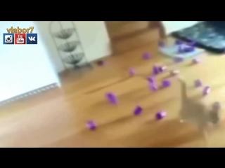 Топ 10 Смешных Видео Про Котов