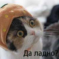 кошки трехцветные. фото