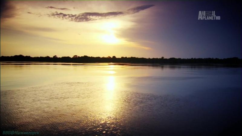 «Неизведанные острова (07). Речные острова Амазонии. Заливной лес» (Документальный, животные, 2013)