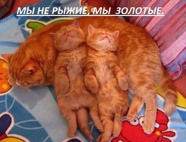 http://cs636823.vk.me/v636823345/b600/b9MXaA98dyw.jpg