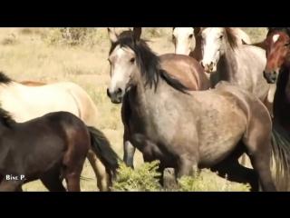 Leo Rojas – Watch Over My Dreams. Индейцы. Красивые лошади. Дикие лошади. Мустанги. Пожалуйста, оберегайте мои мечты!