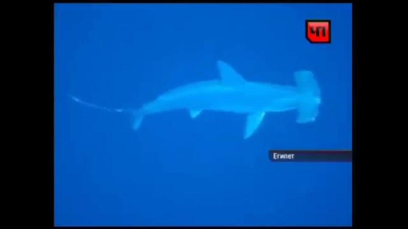 Пьяный серб убил акулу жопой gmzysq cth e bk freke jgjq Kirill Bodrov31
