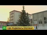 Хотели как лучше, получилось как всегда: в Сибири разразился скандал вокруг елки