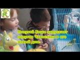 Кеша попугай запускает попугая в клетку. Новый дом Кузи.чевостика