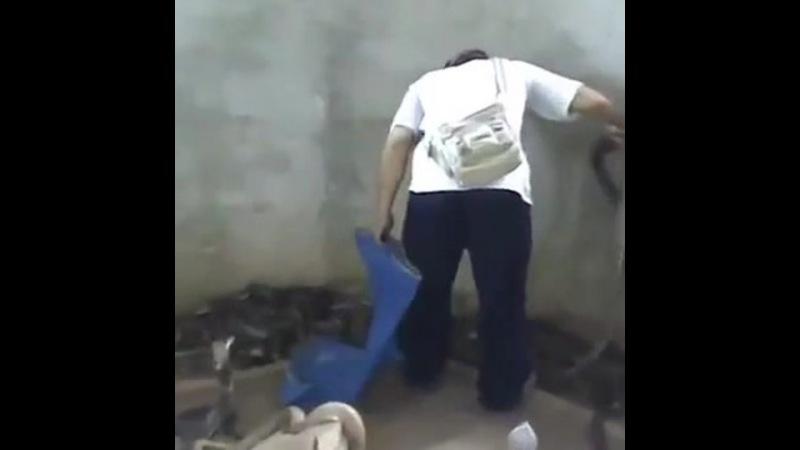 Осадил кобру